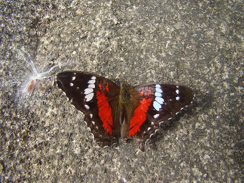 Borboletário Santa Marcelina